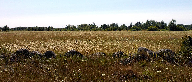 Field at Väike-Pakri island